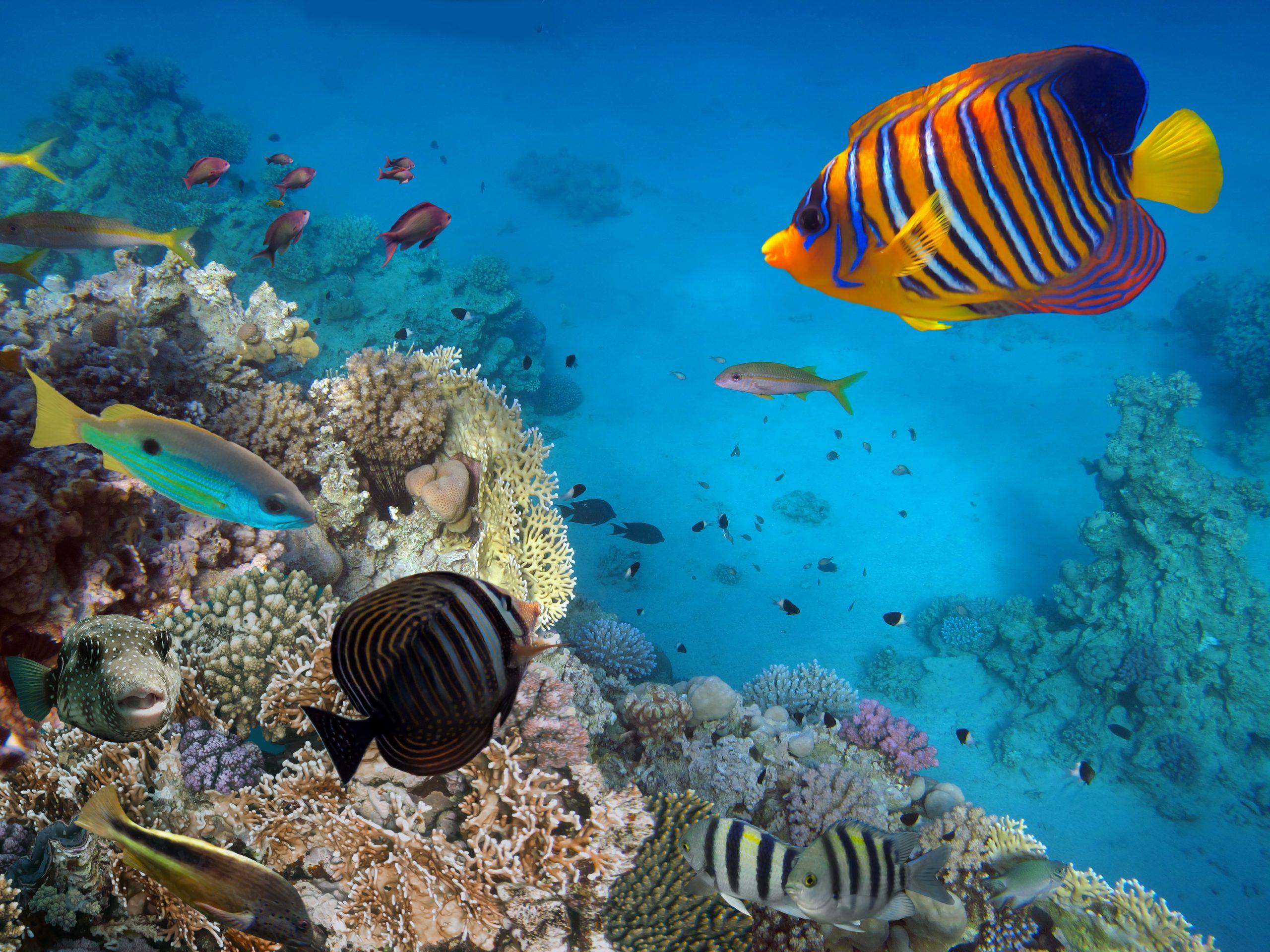 Viaggi e crociere per subacquei nel mondo