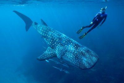 Crociera Sub The best of the Maldives | I migliori e famosi siti d'immersione Profondo Blu