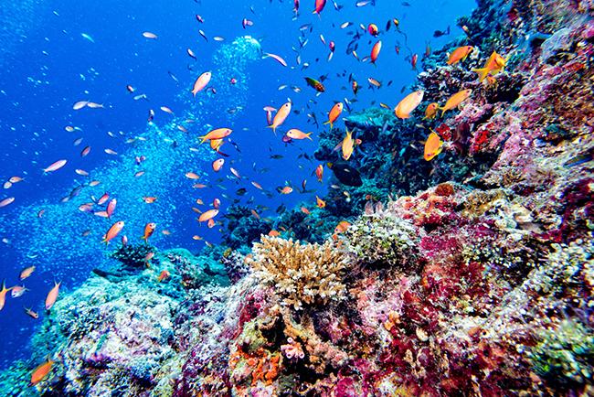 Crociere e viaggi sub alle Maldive