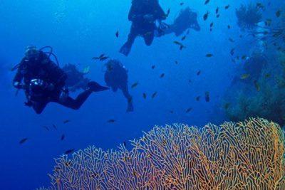 Profondo Blu Crociera Sub agli Atolli del Sud, Maldive | Immersioni profonde e nel pass